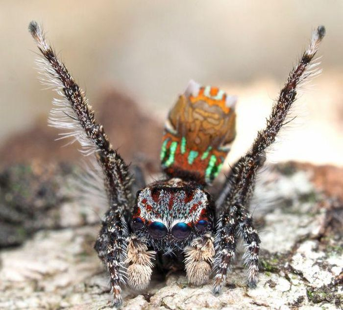 Bí ẩn loài nhện mang trên mình kiệt tác của danh họa Vincent van Gogh