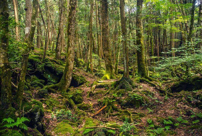Chuyện rùng rợn ở khu rừng gây ám ảnh nhất Nhật Bản