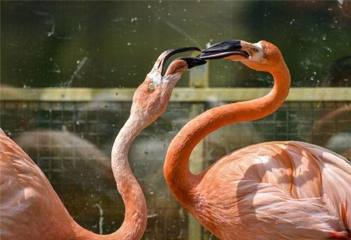 Sự thật về quy tắc kết đôi 'sống chết có nhau' của chim hồng hạc