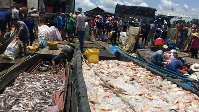 Gần 1000 tấn cá chết trắng sông La Ngà ở Đồng Nai